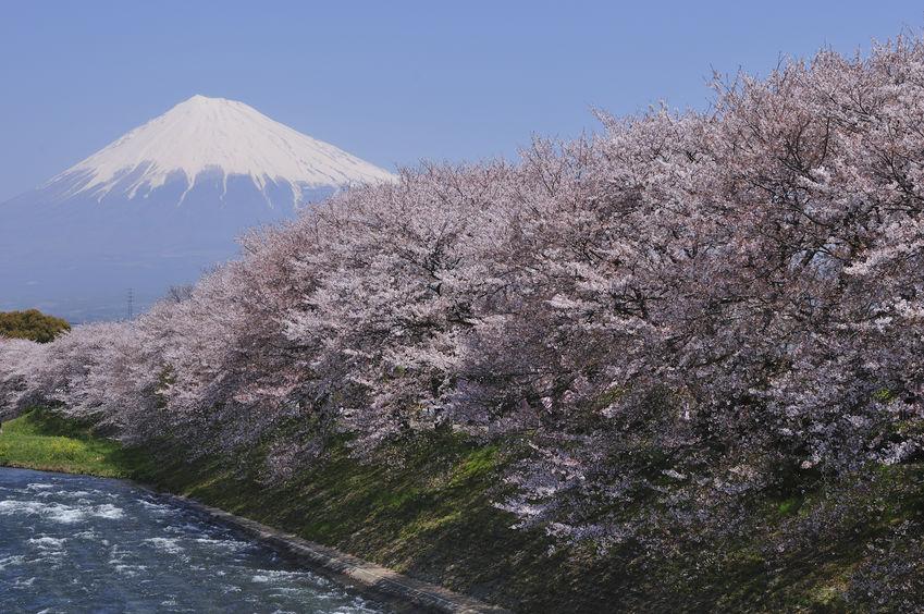 2020年 お花見ツーリング神奈川おすすめスポット
