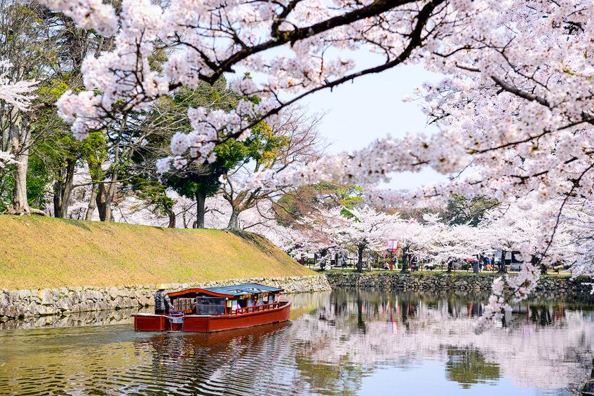 [関西]2019年 京都・彦根・奈良 花見ツーリングスポットまとめ