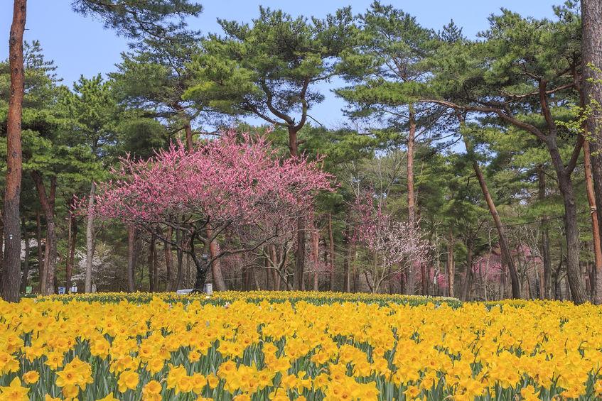 2020年 お花見ツーリング茨城おすすめスポット